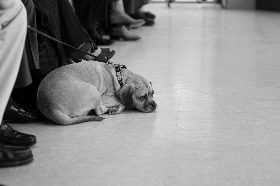 puggle during wedding ceremony