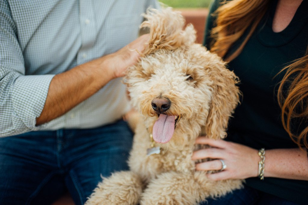 outdoor lifestyle portrait session with dog in austin texas,