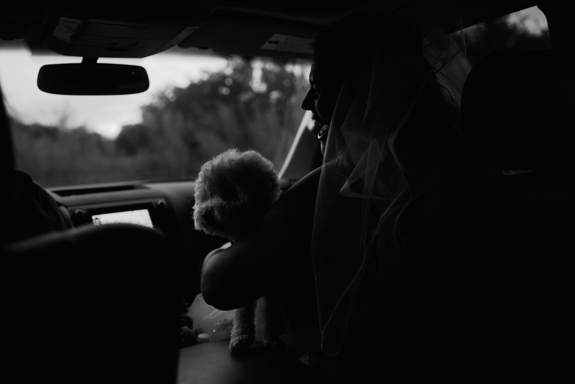 black and white photojournalistic wedding photos, dogs in cars with brides, DIY elopement,