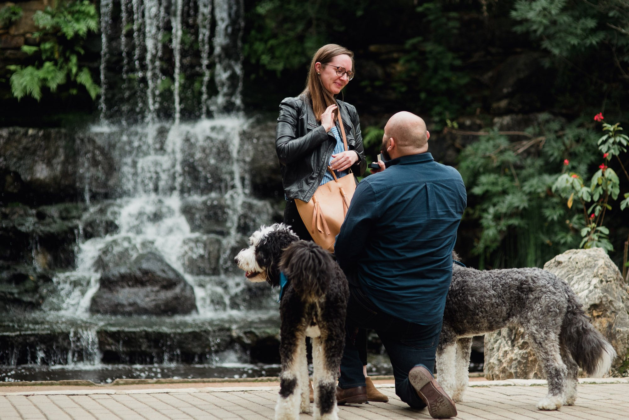 austin proposal photography with dogs